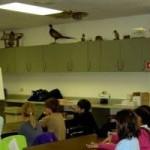 Reforma, czy likwidacja kształcenia ogólnego?