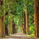 15 rad, aby wytrwać w postanowieniu